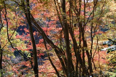 竜神川の紅葉25