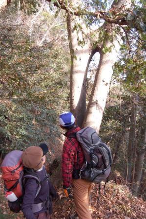 合体の樹4