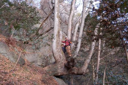 欅の大木5