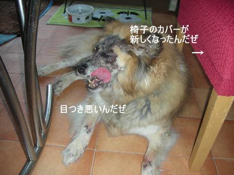 2012年7月14日赤ちゃん0027-1