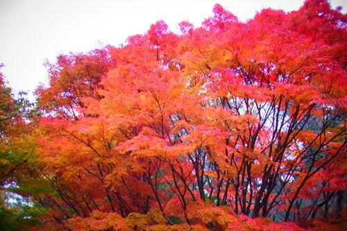 小木津山自然公園