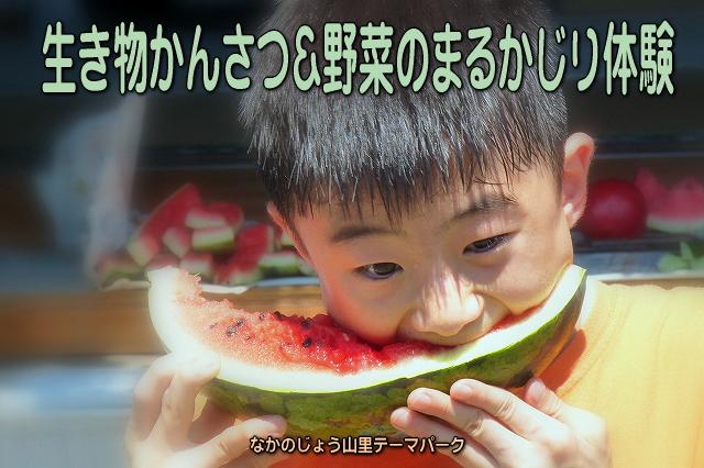 ikimonotai2012.jpg