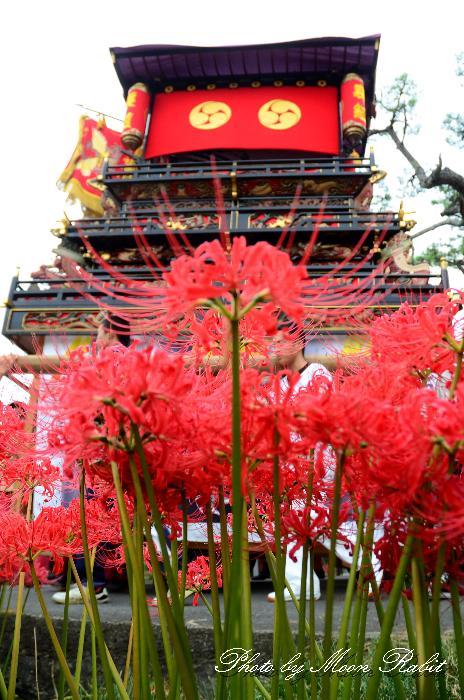 裏組だんじり(屋台・楽車) 山王神社祭 愛媛県西条市氷見 2011年10月2日
