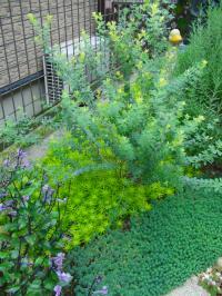 ロータスの緑