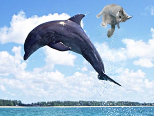 イルカに乗ったみどり5