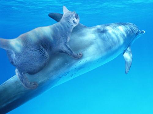 イルカに乗ったみどり3