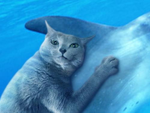 イルカに乗ったみどり4