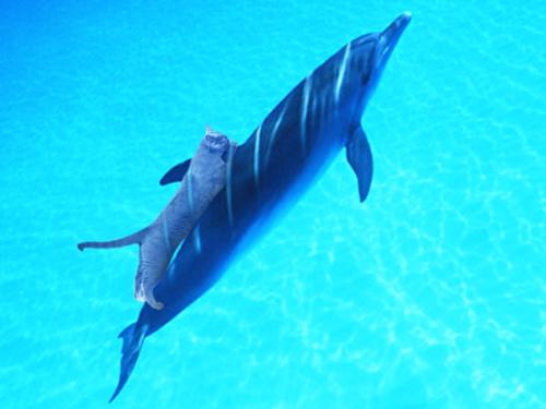 イルカに乗ったみどり2
