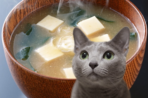 梅雨明け猫3