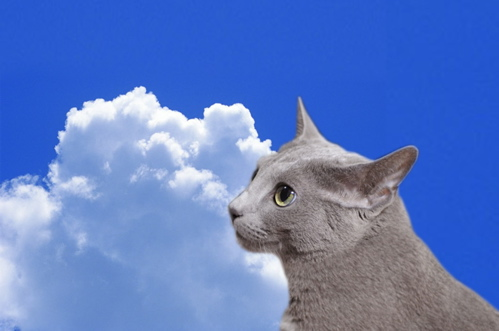 梅雨明け猫7