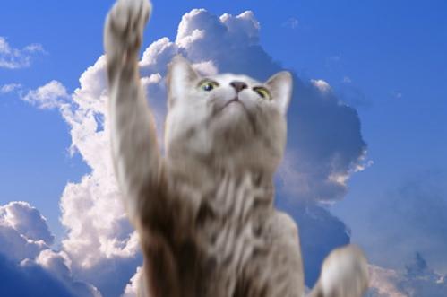 梅雨明け猫8