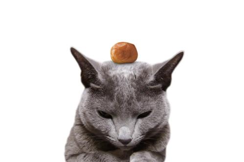 梅雨明け猫6