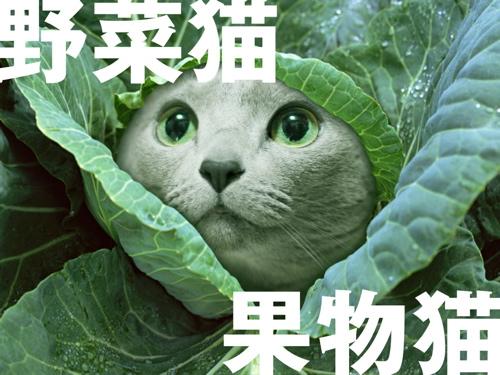 野菜果実猫タイトル