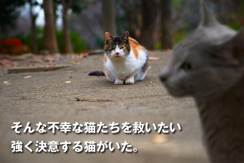 プロジェクトX猫7