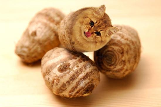 モヘア里芋