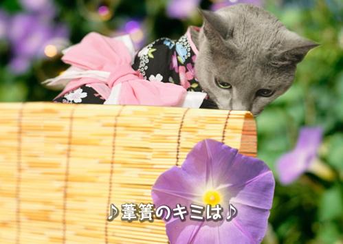 にゃ~夏休み3