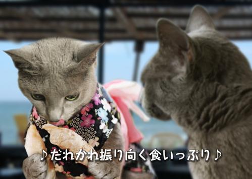 にゃ~夏休み4