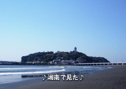にゃ~夏休み2