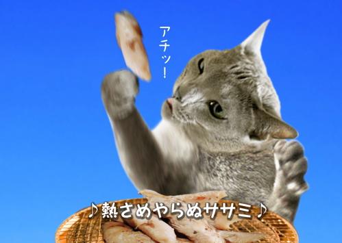 にゃ~夏休み12