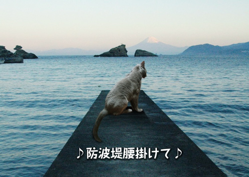 にゃ~夏休み10