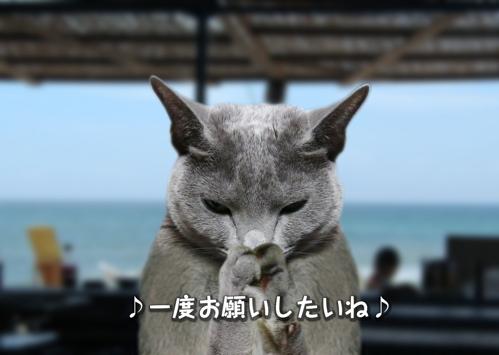 にゃ~夏休み7