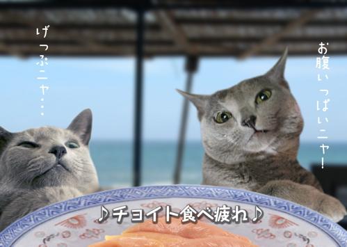 にゃ~夏休み18