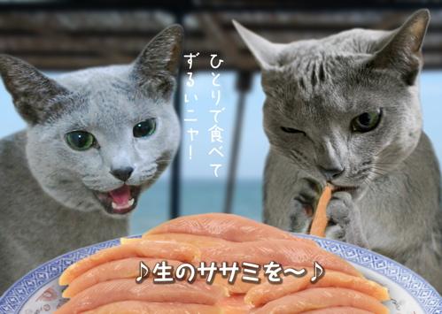 にゃ~夏休み16