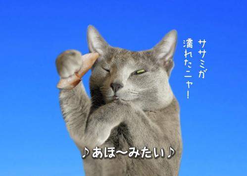 にゃ~夏休み14