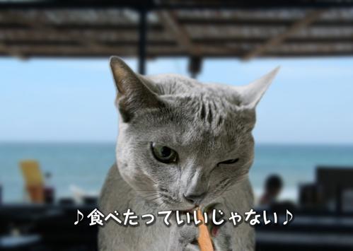 にゃ~夏休み15