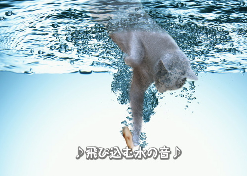 にゃ~夏休み13