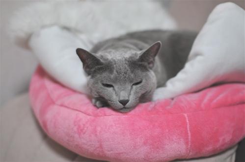 お知らせ猫1