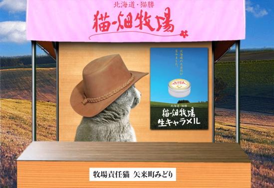 猫畑牧場6