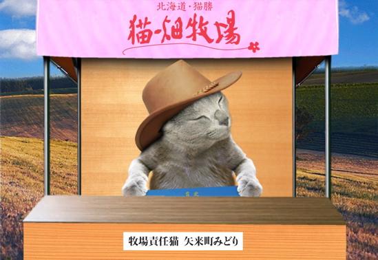 猫畑牧場4