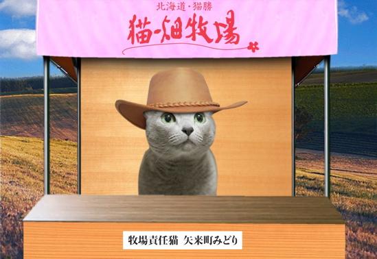 猫畑牧場2