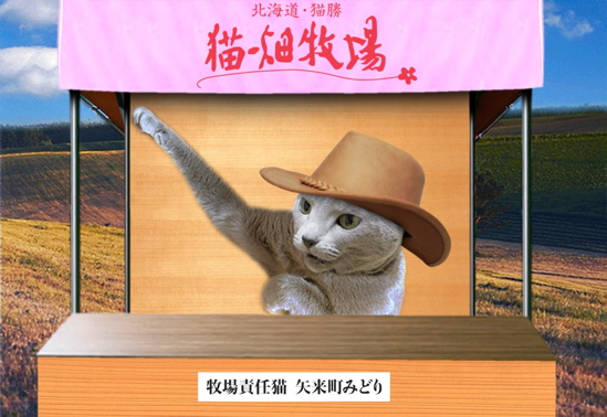 猫畑牧場3