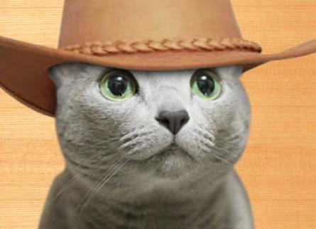 猫畑牧場1