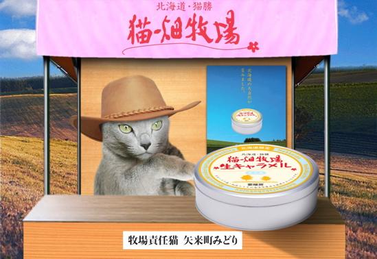 猫畑牧場9