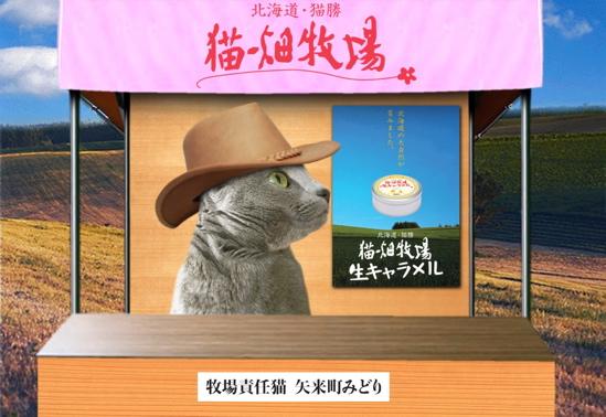 猫畑牧場16