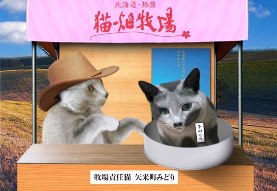 猫畑牧場13