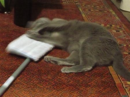 モップ猫2