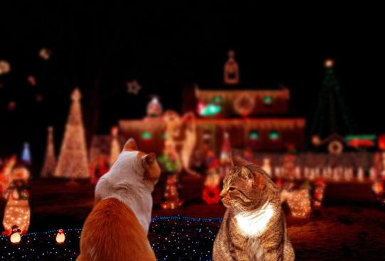 クリスマス屋外