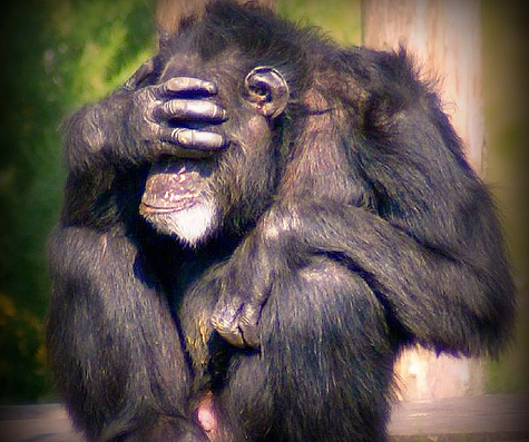 gorila.png
