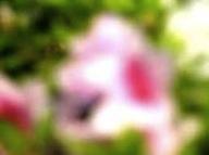 yjimage-11.jpg