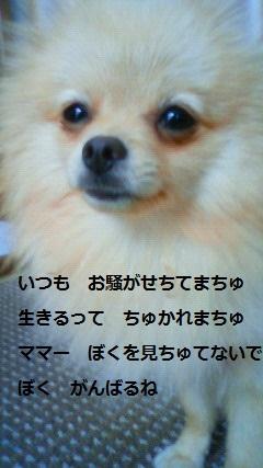 201010230955000.jpg