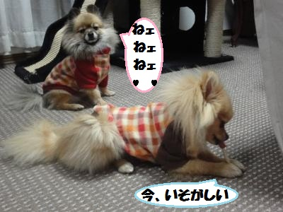 3cc1_20110126232742.jpg