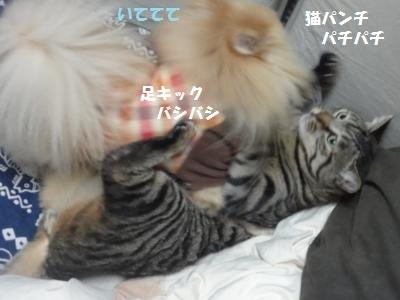 4b4_20110117152418.jpg