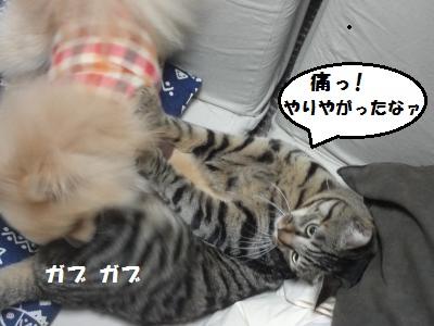 4b5_20110117152417.jpg