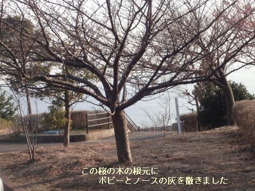 8d.jpg