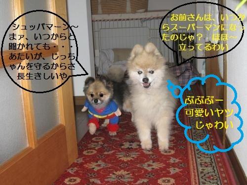 IMG_2048_convert_20101020143248_20101101021930.jpg