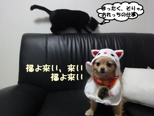 U_OwQ.jpg